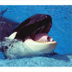 From Shamu to Roller Coasters: Social Media Lessons from SeaWorld